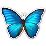 RHINO STICKERS -Blue Butterfly-6 Inch (6