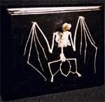 C & A Scientific – Premiere 51010 Real Bat Skeleton