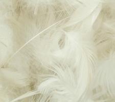 Relleno pluma de ave - 4kg