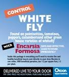Beneficial Encarsia Formosa / White Fly Predator 1000 Count Organic Pest Control