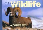 Colorado Wildlife: A Postcard Book (Postcard Books) from Brand: Globe Pequot