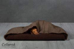 Collared Creatures - Cama para Perro, diseño de espiguilla marrón
