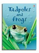Tadpoles and Frogs PDF