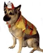 Pet Large - Firechief Pup Costume