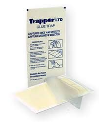 72 Trapper Ltd Mouse Glue Boards Mouse Traps Trapper Ltd Mouse Boards'' by Bell Labs