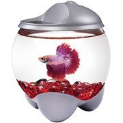 Tetra Gallon Betta Bubble Kit with Changing Color LED Hood from Tetra