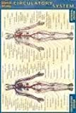 Circulatory System (Quickstudy) by BarCharts, Inc. 1 Crds Edition (6/30/2003)