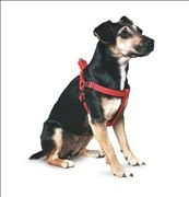 Ancol Padded Dog Harness (Sml - Black): Amazon.co.uk: Pet Supplies