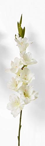Serene Spaces Living Artificial Ivory & Red Gladiola (ivory)