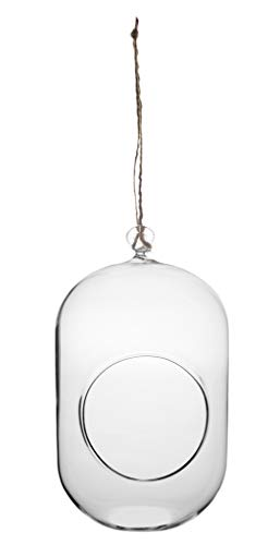 Floral Supply Online - Capsule Shaped Hanging Terrarium Vase for - Small Size Glass planters for Air Plant, Succulents and Smaller Size Plants or Home Decor Items.