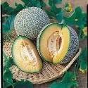 Just Seed Melon Blenheim Orange 8 Seed
