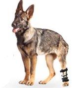 Walkin' Pet Splint for Dogs, Canine Hock Style Rear Leg