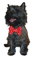 "Calvin K-nine Red Bowtie with White Bones (Red, M) 5"" wide by Designer Duds for Dogs"