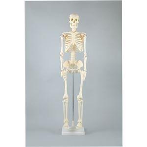 早割クーポン! アーテック 人体骨格模型 85cm 人体骨格模型 ds-1564473 85cm アーテック B01JAN3I3S, Foot&Rain デポ:aa8b25fb --- a0267596.xsph.ru