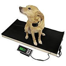 (700 LB x 0.2 LB 38 x 20 Inch Platform Vet Veterinary Animal Livestock Dog Goat Calf Pig Sheep 4H Digital)