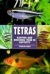 Tetras Keeping and Breeding Them In Captivity