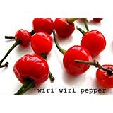 Wiri Wiri Pepper, Very Hard to Find , Capsicum Frutescens, From Guyana ! 25 Seeds