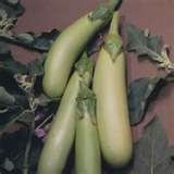 buy HeirloomSupplySuccess 25 Heirloom Louisiana Long Green Eggplant Seeds now, new 2018-2017 bestseller, review and Photo, best price