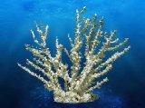 Coral Replica - Black Octopus Coral 20x6x18''