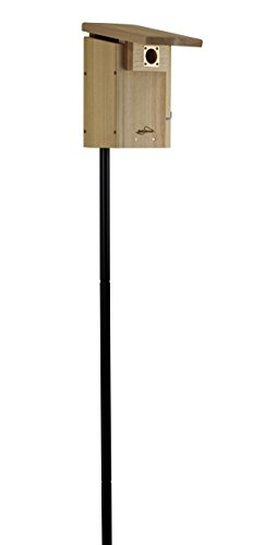Eastern Bluebird Nest - Kettle Moraine Cedar Super Bluebird House with Steel Pole Package (1)