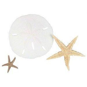 Hinterland Trading Sealife Treasures Starfish