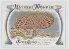Socotra Archipelago (Baseball Card) 2014 Topps Allen & Ginter's - Natural Wonder #NW-18 - Socotra Single