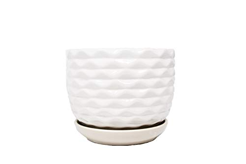- Southern Magnolia Glazed White Wave Ceramic Flower Pot- One 6-Inch Indoor Planter for Plants and Succulents with Drainage Hole and Saucer, Modern Ceramic Pot for Plants Such as Cactus and Succulents