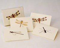 Dragonfly Card Note - Earth Sky & Water Steven M. Lewers LEWERSNC25 Dragonfly & Damselfly Notecard Assortment (2 Each of 4 Styles)