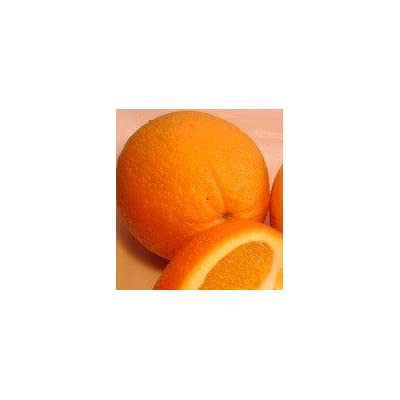 Minneola Tangelo Tree - 2 Years Old - Can not Ship Any Citrus Outside The State of Texas : Garden & Outdoor