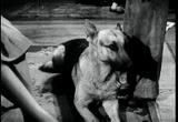 War Dogs (1942) A young boy donates his pet, a police dog, to the army to be trained as a war dog.