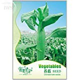 Chinese Kale Cabbage Mustard Seeds, Original pack, 220 Seeds, sweet and delicious vegetable IWSC030
