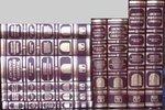 Archivo Portuguese Oriental in Six Fasciculo Em 10 Parties, Cunha, Rivara D., 8120607775