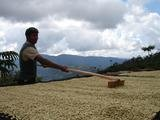 Two 66-lbs bags (132 lbs total) BOLIVIA CARANAVI (AAA) GREEN COFFEE BEANS by Invalsa Coffee (Image #4)