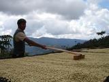33 lbs BOLIVIA ORGANIC CARANAVI (AAA) GREEN COFFEE BEANS by Invalsa Coffee (Image #4)