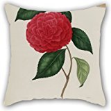 [Cushion Cases Of Flower,for Home Office,monther,lover,home Office,seat,gf 20 X 20 Inches / 50 By 50 Cm(twice] (Abc Party Costume Ideas)