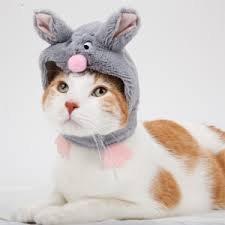 Grey Pet Mouse Hat Small (Unique Pet Costumes)