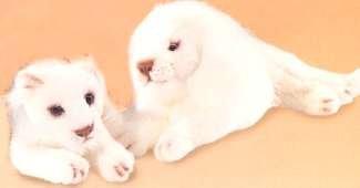 [White Lioness 12