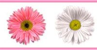 Flower Power Pink Daisies Set of 4 Self-Stick Wall Borders