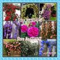 Las plantas trepadoras, semillas de flores chinas, que suben Semillas Roses 1 lote de 200 piezas, de 9 piezas plantas…