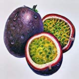 Panama red passionfruit Seeds Passiflora Panama red Edible Fruit 10 Seeds
