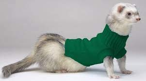 (Marshall Pet Ferret Sweater Assorted Colors - Green )
