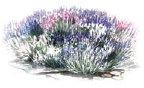 La Tee Da Effusion Fragrance Oils (Monogrammed Linens, 16 oz) (Lavender Oil Lamp)