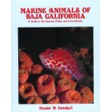 Marine Animals of Baja California : A Guide to the Common Fish and Invertebrates, Gotshall, Daniel, 0930030249