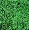 Houndog 8 Turf Type Tall Fescue 5 LB. (Best Turf Type Tall Fescue)