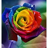 .Wholesale 100pcs New Multi-colored Rainbow Rose Seeds Home Gardening Chinese Rose Flower Seed Bonsai pots plants Free Shipping, ()
