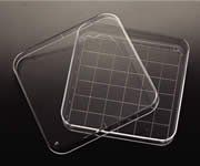 Square Petri Dish, Plain 500/cs by Electron Microscopy Sciences