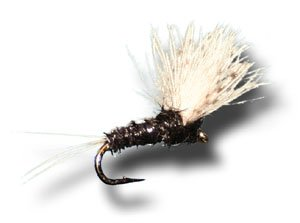 - CDC Biot Comparadun - Trico Male Fly Fishing Fly - Size 22 - 12 Pack