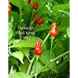 - HAWAIIAN RED KONA -30 Pepper Seed, Capsicum frutescens,Extremely Hot Heirloom .