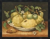 Still Life with Bowl of Citrons by Garzoni 31 x 24 Inches ()