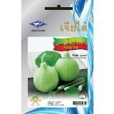 Bottle Gourd Round Shape (14 Seeds) quality Seeds - 1 Package From Chai Tai, - Shape Thailand